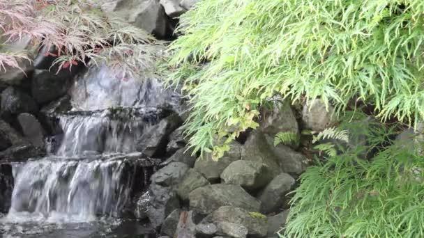 vodopád s javory a kapradiny v zen garden