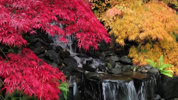 barevné přichycena listy javorů s vodopádem v zen zahrada na podzim