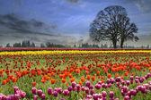 Fotografia tulipani in fiore in primavera