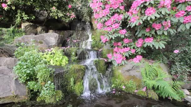 vodopád s kapradiny, rododendronů květů, Hostaš a moss v crystal springs zahradní v Portlandu, oregon 1080p