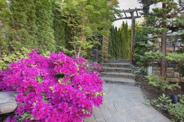 Pink Azaleas Blooming Along Garden Path