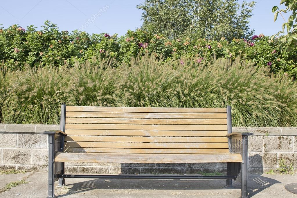 Park Bench with Fountaingrass and Rose Bushes