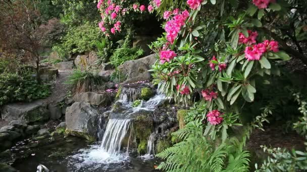 Waterfall in Backyard Garden with Ferns Moss and Pink Rhododendron Flowers Blooming in Spring Season 1080p
