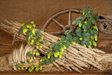 still life with beer barley and hops