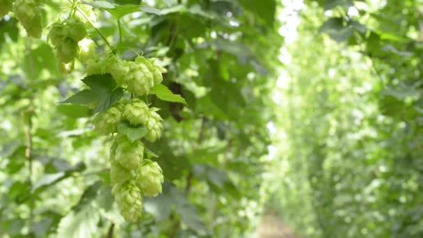hop zahrada