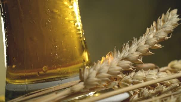 pšenice a pivo
