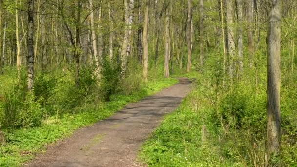 Les v jarní