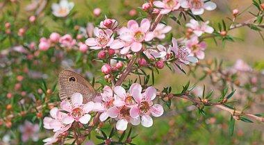 Australian wildlife flower and butterfly