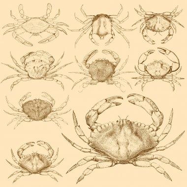 Set of 9 vintage engraved crabs