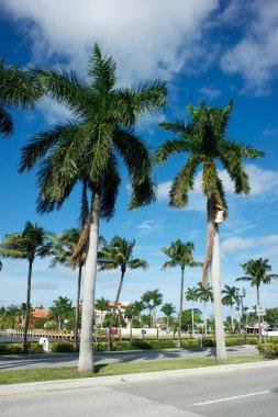 Florida,Usa