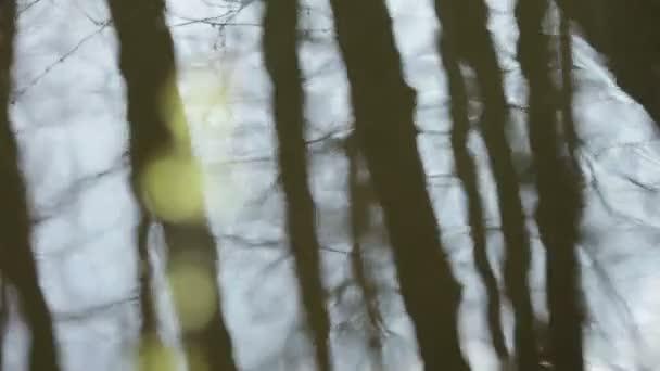 nové listy na jedné větvi na pozadí vody s odrazy v její stromy