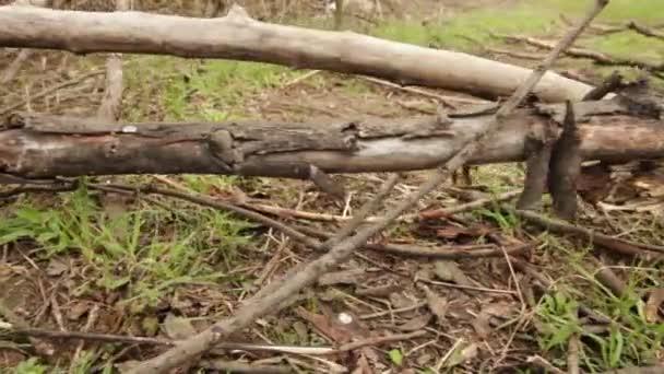 padlé stromy na lesní cestě