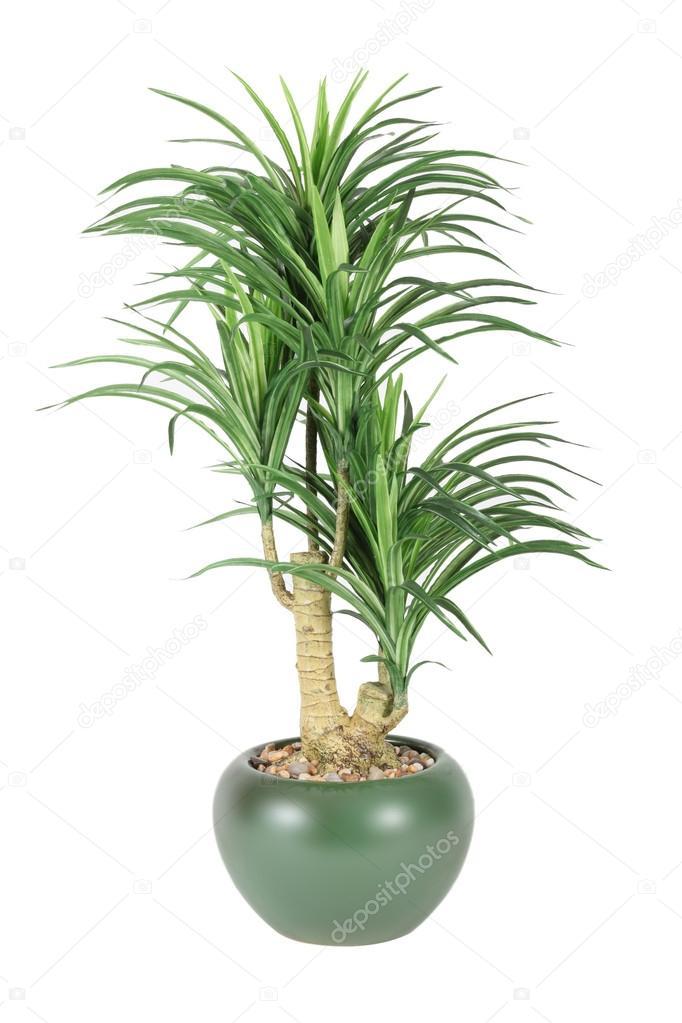 plantas decorativas para el hogar fotos de stock
