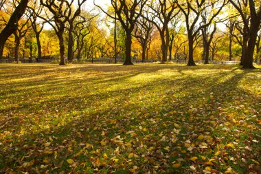 Autumn in Central Park New York