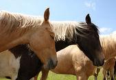 lovak pihenő