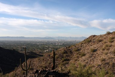 Saguaro Cactus in the Hills near Phoenix