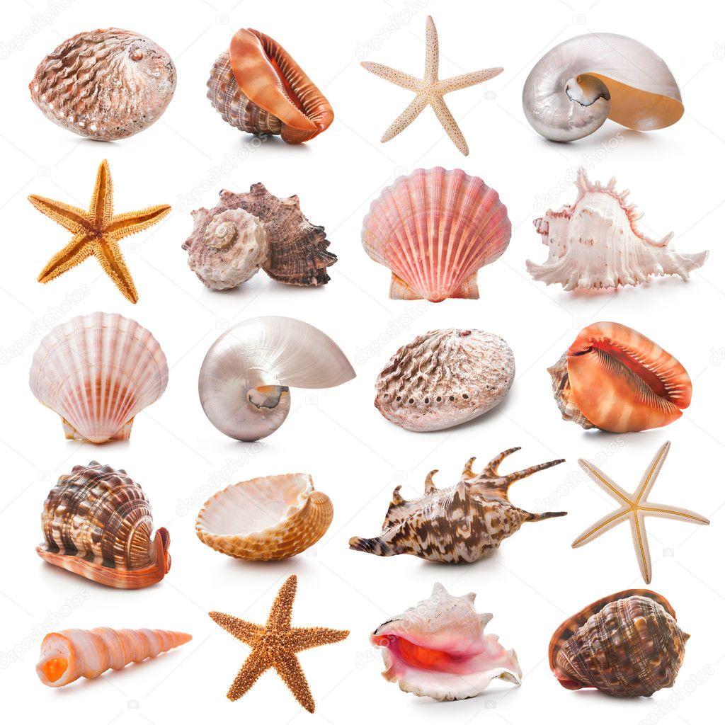 Seashell collection stock photo 23586183 - Como hacer conchas finas ...