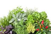 čerstvé kuchyňské byliny