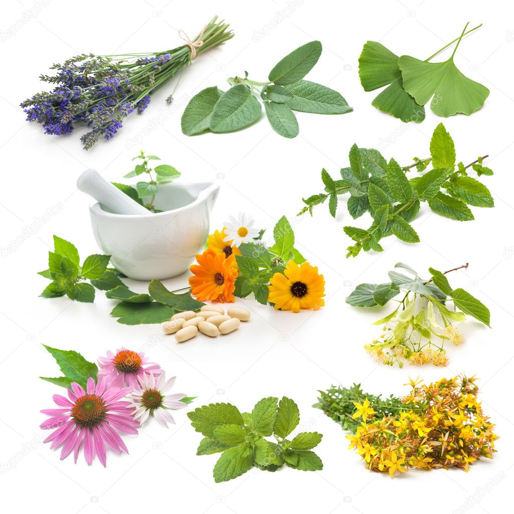 Collection of fresh medicinal herb