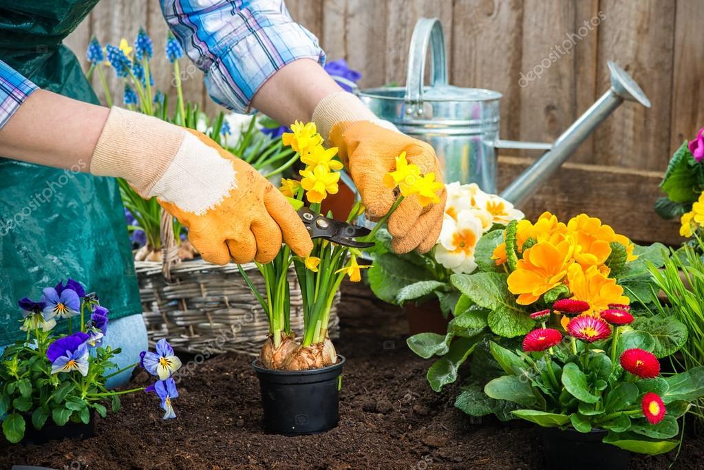 jardineiro plantar flores — Stock Photo © alexraths #42796381