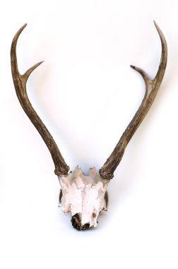 This is horns of deer very well kept.