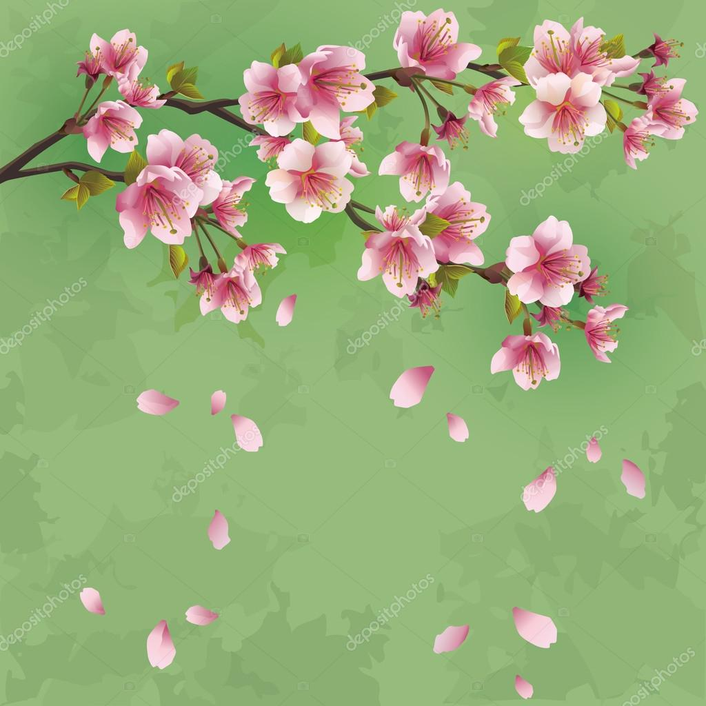Grunge background with sakura blossom - Japanese cherry tree