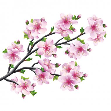 Japanese tree sakura, pink cherry blossom isolated on white background. Vector illustration stock vector
