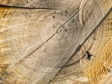 Tree stump wood texture