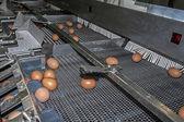 Fényképek pont a tojások osztályozását végző