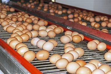Road eggs 2