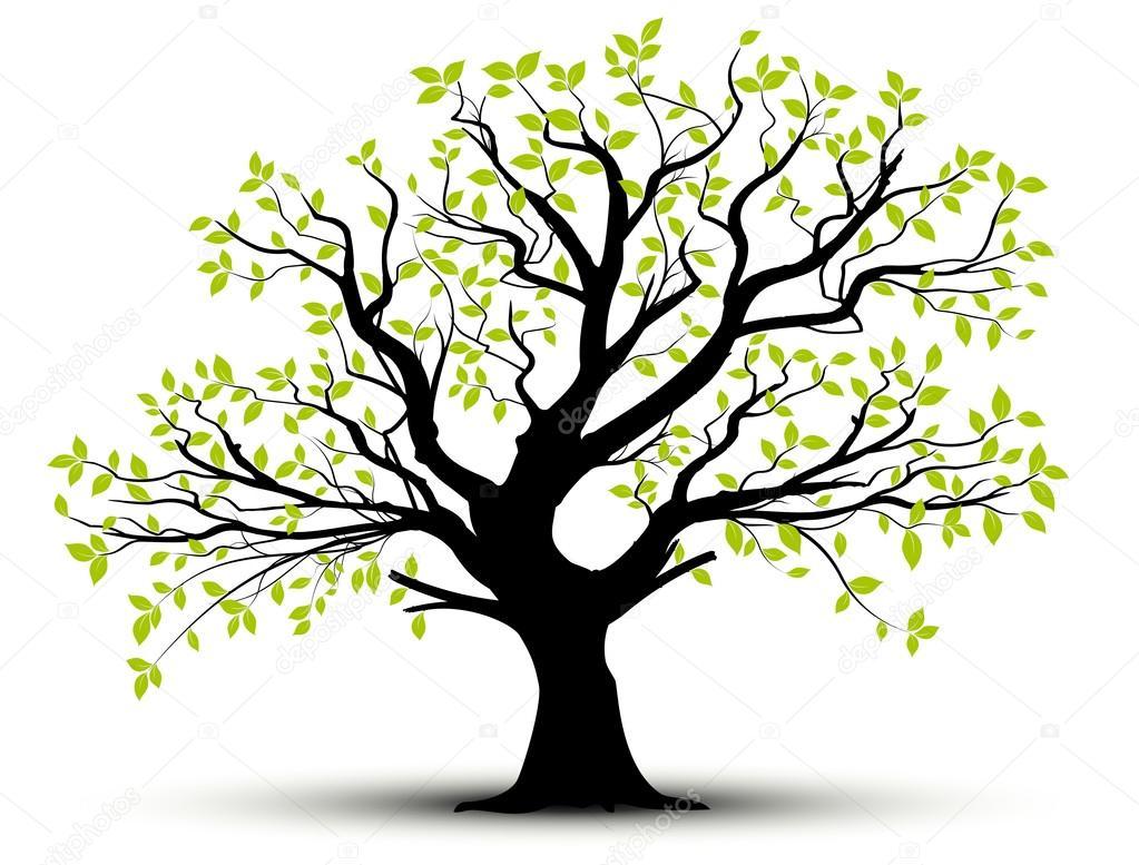 Vecor tree, green foliage