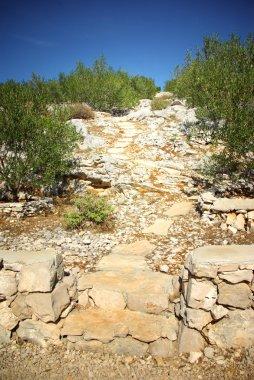 Rocky path in olive grove, Croatia Dalmatia
