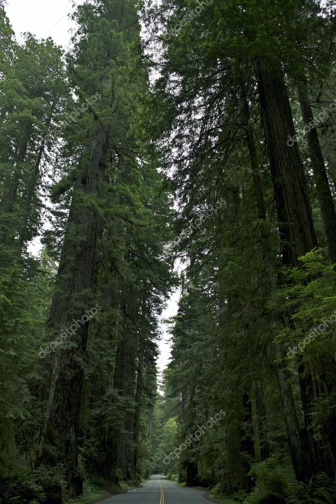 Фотообои Redwood National Park