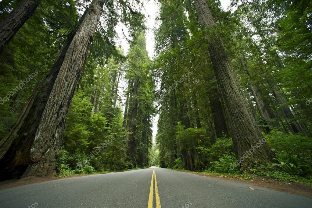 Фотообои Redwood State Park