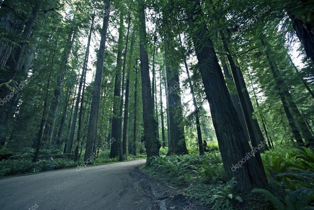 Фотообои Редвуд Лесной