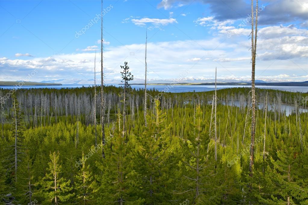 Yellowstone Panorama