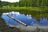 Yellowstone rybník
