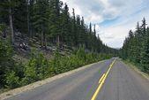 strada forestale Colorado