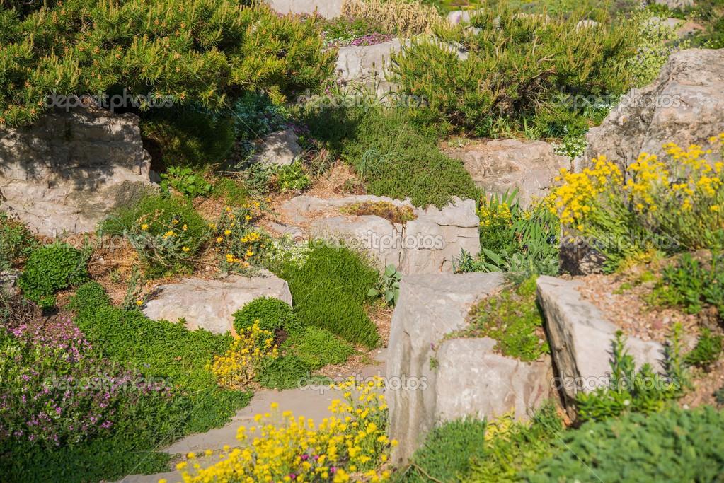 Giardino roccioso estivo foto stock welcomia 48867245 - Giardino roccioso foto ...