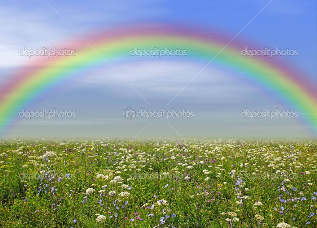 prato di fiori selvatici, cielo blu e arcobaleno come sfondo — Foto ...