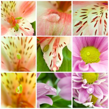Collage of macro shots of flowers