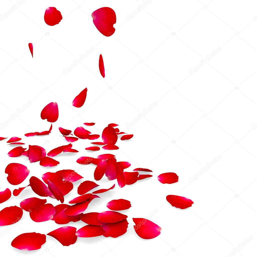 Petals of roses fall on a floor