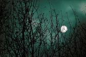 Fényképek Félelmetes éjszaka táj, erdő