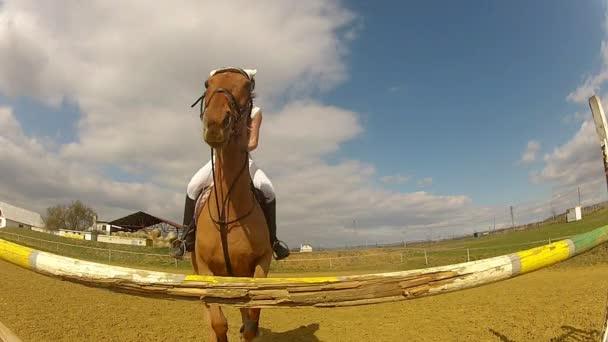koní parkurových
