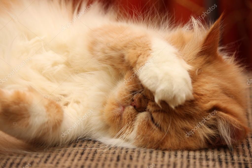 adolescent gingembre chatte lesbiennes jouir sur chatte