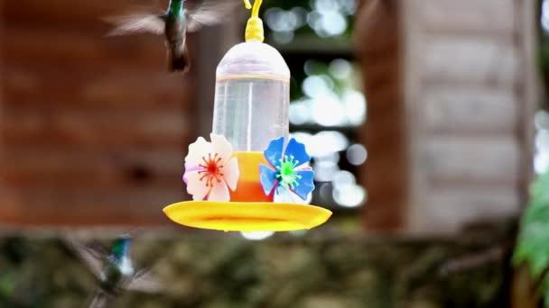 Kolibřík zelené hrdlo a další