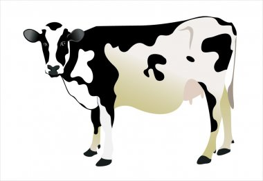 cow isolated on a white background