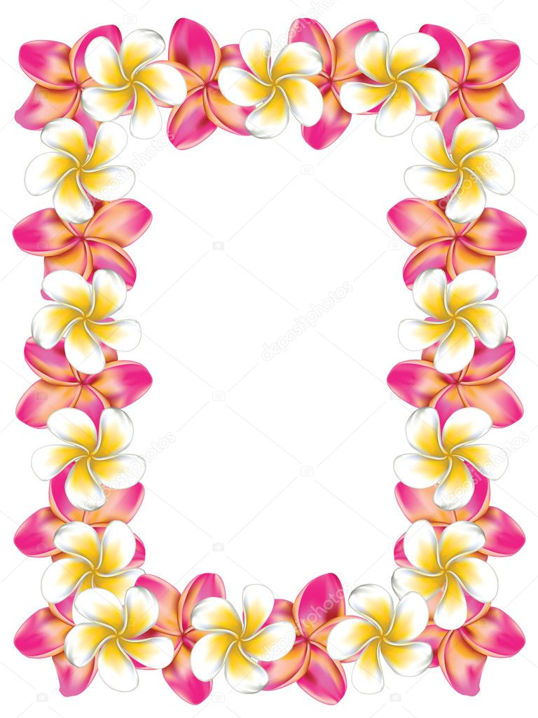 White and pink frangipani flowers frame