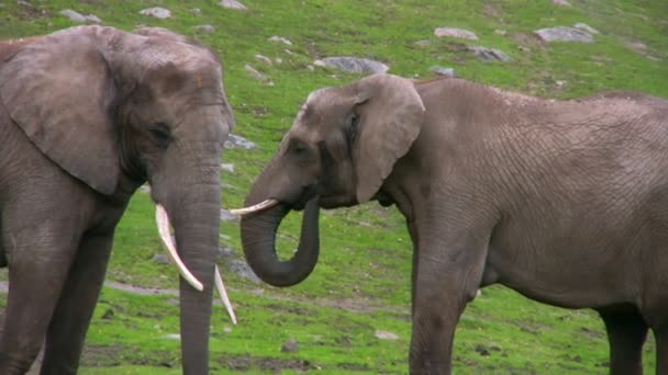 Két elefánt 2