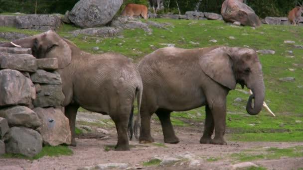 Két elefánt 1